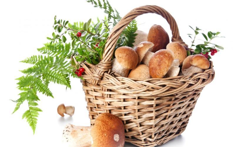 Невозможно жить в России и не собирать грибы