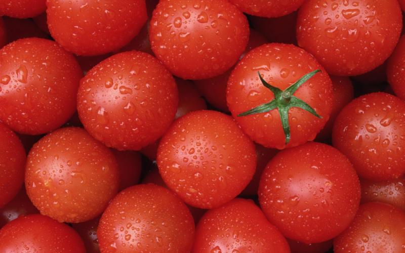 Необходимо тщательно подойти к выбору помидоров